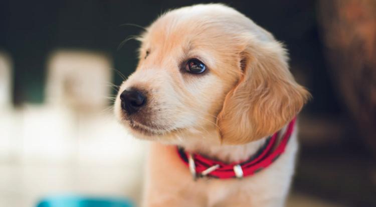 Regalos originales para amantes de los perros